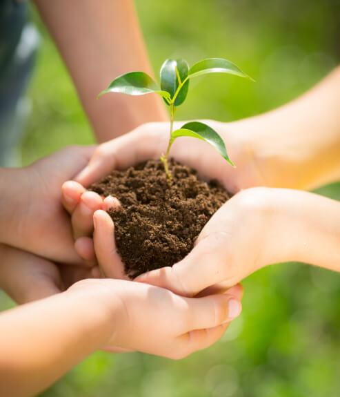 Producción de cultivo sostenible de calabacín ecológico