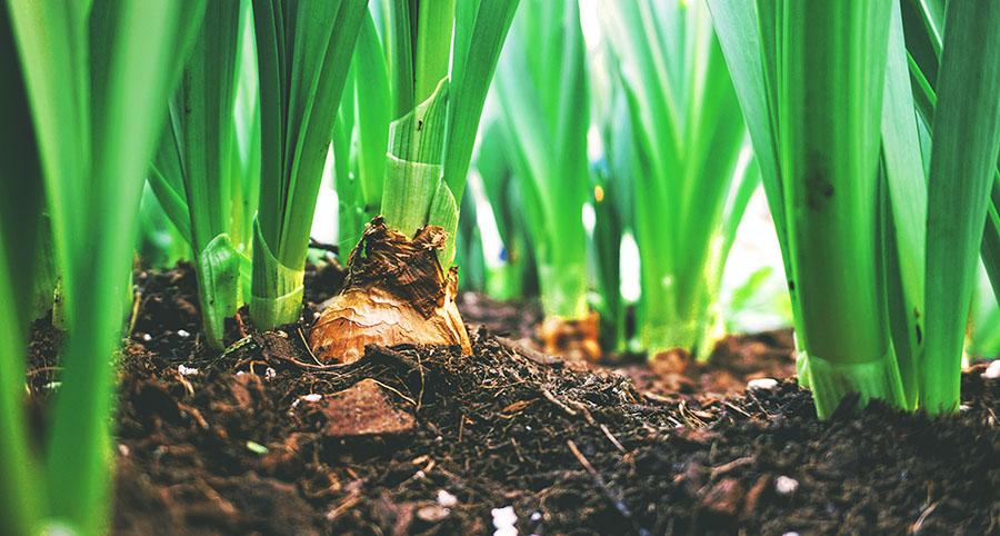 Beneficios de la agricultura ecológica para el medio ambiente