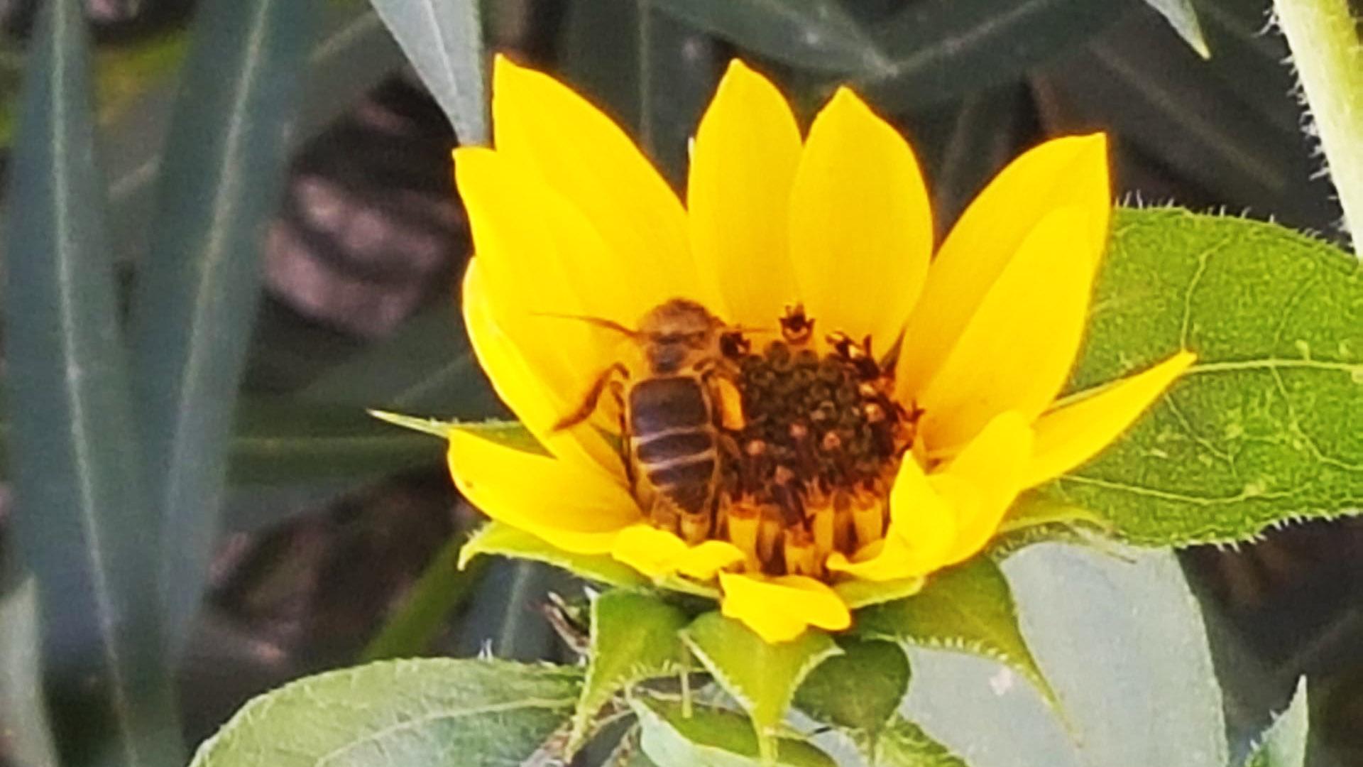 El cultivo del calabacín ecológico - LQA Organic