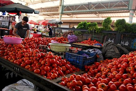 Tomatoes or Terrorists by Open Democracy
