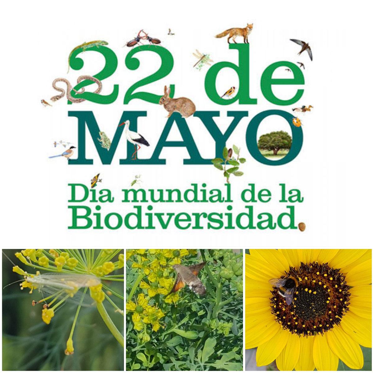 22 de mayo Día Mundial de la Biodiversidad