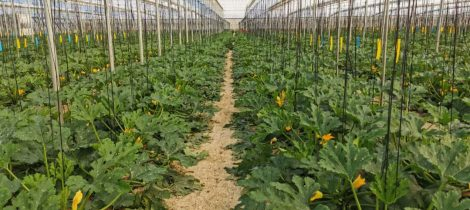 Cultivo ecologico - LQA Thinking Organic